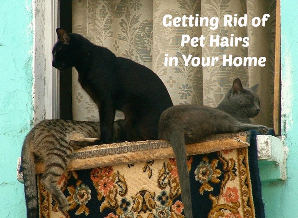 Pet Hairs
